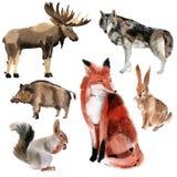 Jogo de animais da floresta Ilustração da aquarela no fundo branco Imagens de Stock Royalty Free
