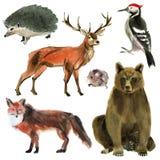 Jogo de animais da floresta Ilustração da aquarela no fundo branco Fotos de Stock Royalty Free