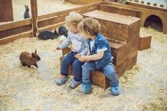 Jogo de crianças com os coelhos no jardim zoológico de trocas de carícias foto de stock