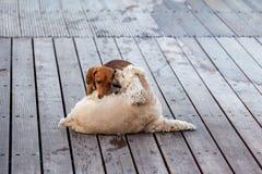 Jogo de dois cachorrinhos fotos de stock royalty free