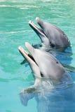 Jogo de dois golfinhos fotografia de stock