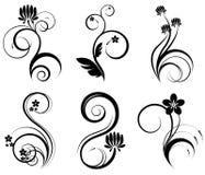 Jogo de elementos florais ilustração do vetor