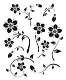 Jogo de elementos florais para o projeto, vetor Fotos de Stock Royalty Free