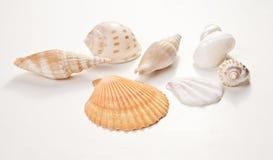 Jogo de escudos do mar Imagem de Stock Royalty Free