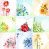 Jogo de flores da aguarela Imagens de Stock Royalty Free