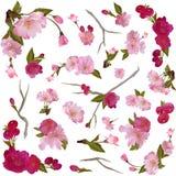 Jogo de flores e de filiais isoladas da mola Imagens de Stock