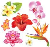 Jogo de flores tropicais Foto de Stock Royalty Free