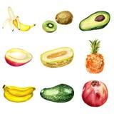 Jogo de frutas tropicais Fotografia de Stock Royalty Free