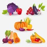 Jogo de legumes frescos Ilustração saudável do vetor do alimento Imagem de Stock