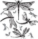 Jogo de libélulas decorativas ilustração royalty free
