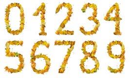 Jogo de números feitos das folhas de outono Imagem de Stock Royalty Free