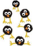 Jogo de pintainhos pretos surpreendidos Foto de Stock