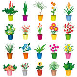 Jogo de potenciômetros coloridos das flores foto de stock royalty free