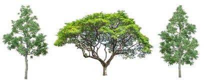 Jogo de quatro árvores isoladas de encontro ao branco puro imagens de stock royalty free