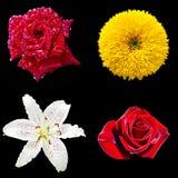Jogo de quatro flores Fotos de Stock Royalty Free