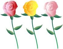 Jogo de rosas coloridas Fotos de Stock Royalty Free