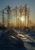 Jogo de sombra do inverno Imagens de Stock Royalty Free