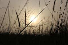 Jogo de Sun Foto de Stock Royalty Free