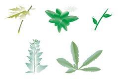 Jogo do ícone das plantas Fotografia de Stock Royalty Free