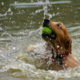 Jogo do cão fotografia de stock