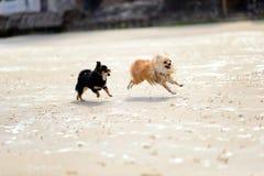 Jogo do cão Imagem de Stock
