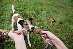 Jogo do cão com corda Fotos de Stock