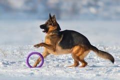 Jogo do cão na neve Imagem de Stock