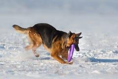 Jogo do cão na neve Fotografia de Stock