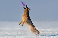 Jogo do cão na neve Fotografia de Stock Royalty Free