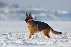 Jogo do cão na neve Imagem de Stock Royalty Free