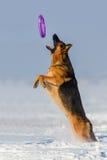 Jogo do cão na neve Fotos de Stock Royalty Free