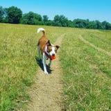 Jogo do cachorrinho foto de stock royalty free
