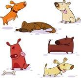 Jogo do Doggy Fotografia de Stock Royalty Free