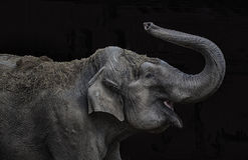 Jogo do elefante Imagens de Stock