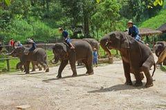 Jogo do elefante Fotografia de Stock Royalty Free