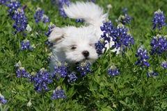 Jogo do filhote de cachorro fotos de stock royalty free