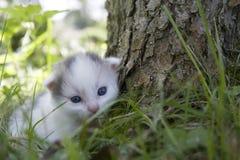 Jogo do gatinho Foto de Stock Royalty Free