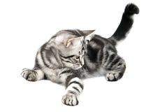 Jogo do gatinho Imagens de Stock Royalty Free