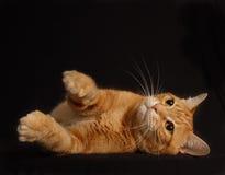 Jogo do gato Fotos de Stock Royalty Free