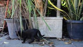 Jogo do gato do bebê e corrida e salto domésticos tailandeses no jardim filme