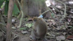 Jogo do macaco com garrafa plástica vídeos de arquivo