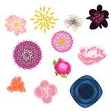 Jogo do vetor da flor Jogo floral dos botões Fotografia de Stock
