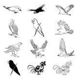 Jogo do vetor de 12 desenhos do pássaro Fotografia de Stock Royalty Free