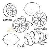 Jogo do vetor do citrino do limão Fotos de Stock