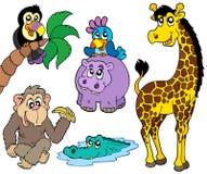 Jogo dos animais africanos 2 Fotografia de Stock