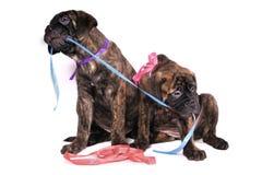 Jogo dos filhotes de cachorro imagem de stock royalty free