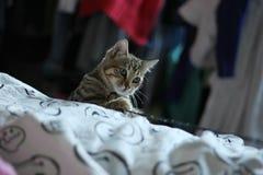 jogo dos gatos Fotos de Stock Royalty Free