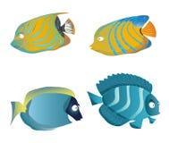 Jogo dos peixes Imagem de Stock