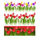 Jogo dos tulips Campo das tulipas Imagens de Stock Royalty Free