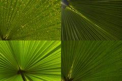 Jogo em folha de palmeira do sumário Fotografia de Stock Royalty Free